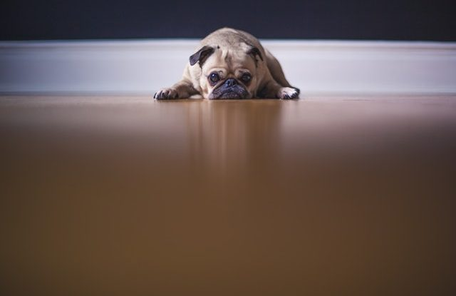 liability insurance for dogs